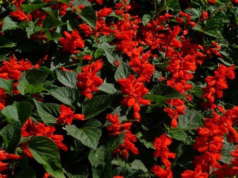 herbst blume im garten den garten im herbst farbenfroh mit blumen und pflanzen