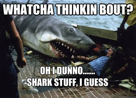 Whatcha Thinkin About Meme - whatcha thinkin bout oh i dunno shark stuff i