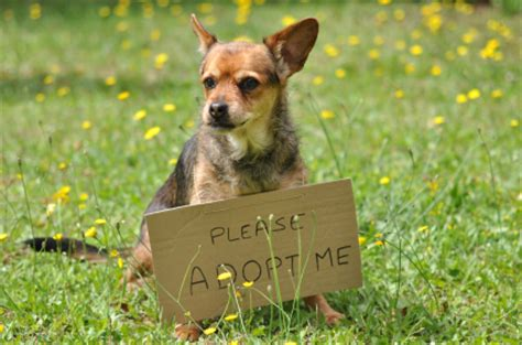 rescue a puppy 5 reasons why you should adopt an aging