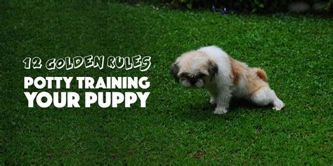 puppy potty tips puppy potty 12 golden tips to do it the right way