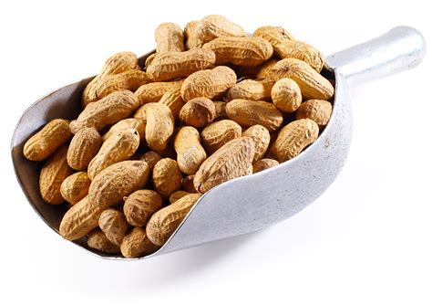 jumbo roasted peanuts in shell nuts nuts com