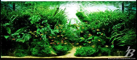 Java Moss Aquascape by Does Anyone Pics Of A Scape Using Only Java Moss And
