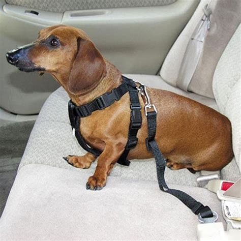 car harness for dogs harness leash seat belt combocanine care products