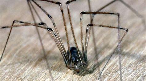 spinnen fernhalten wohnung spinnen im haus vermeiden tipps f 252 r eine spinnenfreie wohnung