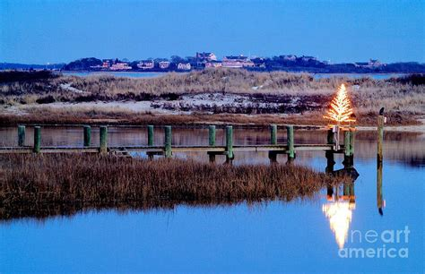 you cut christmas trees in the cape cod area cape cod tree photograph by matt suess
