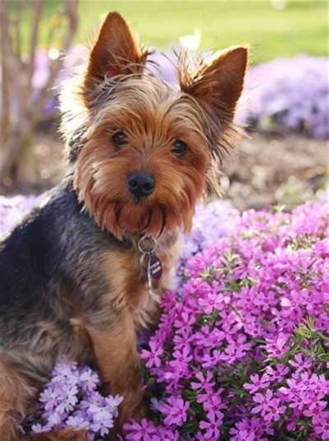 puppy stool remedy stool best pet home remedies