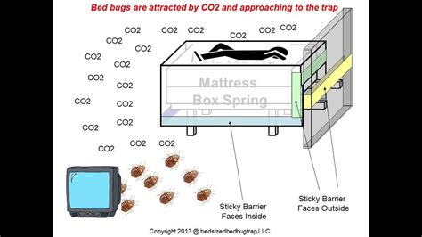 co2 traps for bed bugs bed sized bed bug trap better than any co2 traps youtube
