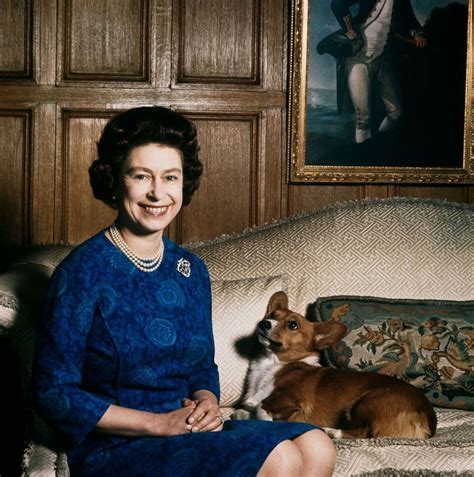 queen corgi queen elizabeth declares no more corgis