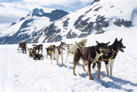sledding alaska alaska shore excursions 4 juneau and skagway adventures