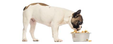 bulldog francese alimentazione consigli e suggerimenti sull alimentazione di un bulldog
