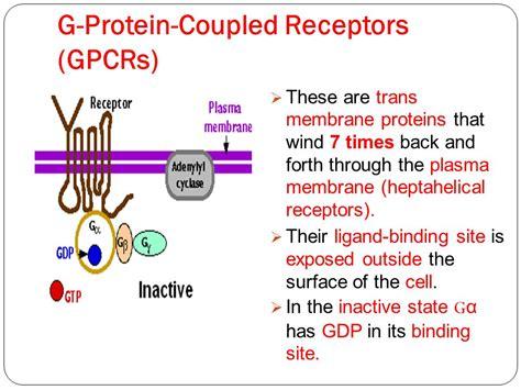 Dr.Saidunnisa M.D Dr.Saidunnisa M.D - ppt video online ... G Protein Coupled Receptors Gpcrs
