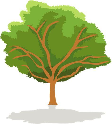 imagenes png vectores vector gratis 193 rbol verde al aire libre planta