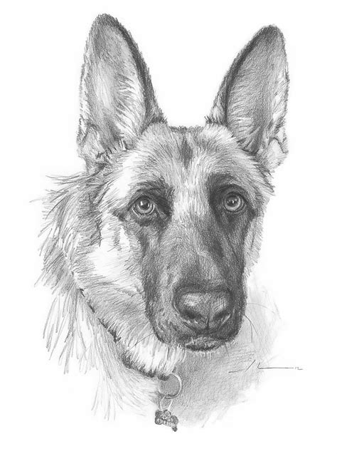 Home Decor Elephants by Quot German Shepherd Drawing Quot By Mike Theuer Redbubble
