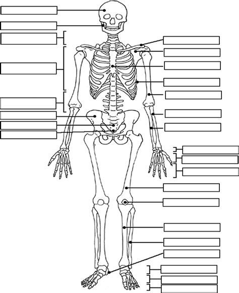 skeleton worksheet skeleton label