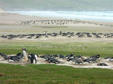 moon patagonia including the falkland islands travel guide books excursion to saunders island at the neck cabin falkland