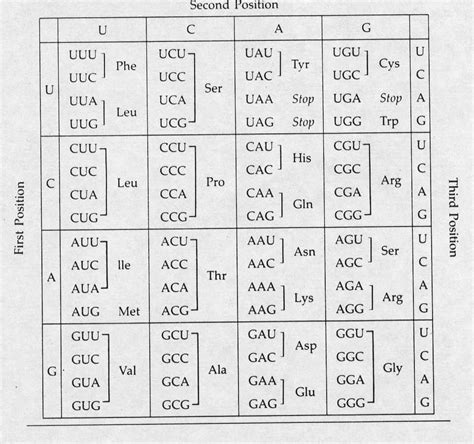 amino acid table codon chart diabetes inc