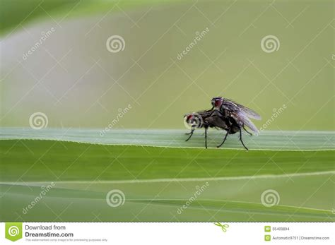 flies stock images image 35409894