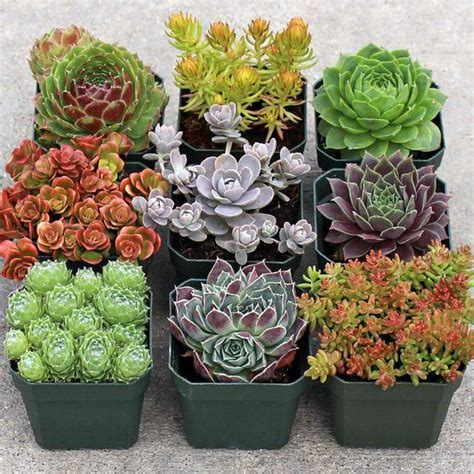 Rock Garden With Potted Plants 25 Best Ideas About Rockery Garden On Pinterest Succulent Rock Garden Succulents Garden And