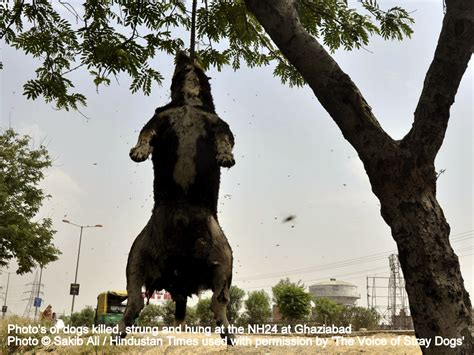 Doggie From Tree by Dogs Killed Strung And Hung On Nh24 At Ghaziabad