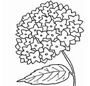 My Mother Flower Coloring Page  Download &amp Print Online