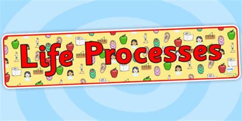 biography banner ks2 life processes display banner life processes living things