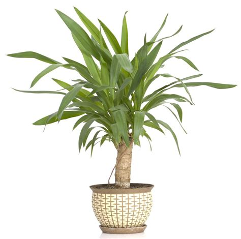 plants that don t need water plants that surprisingly don t need much water after all