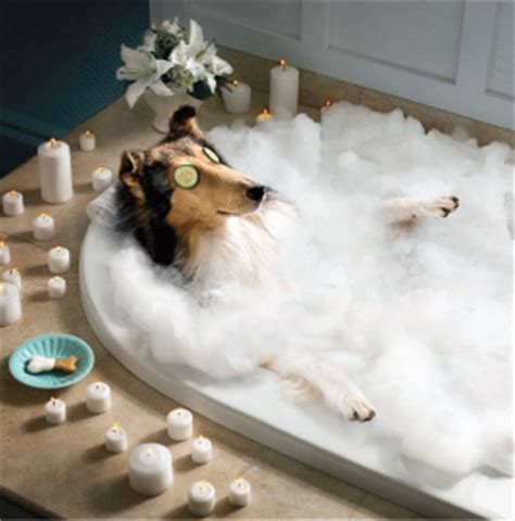 pet bathtub for dogs perfect paws grooming spa spa packages