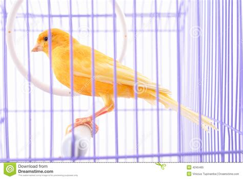 canary bird cage stock photos canary in the cage stock image image of beack jail