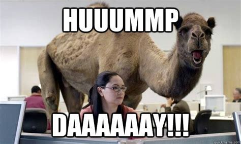 Camel Hump Day Meme - aww shucks diary of a mrs midweek randoms