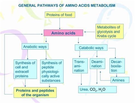 Metabolism Detoxes by Protein Metabolism Principles In Biochemistry