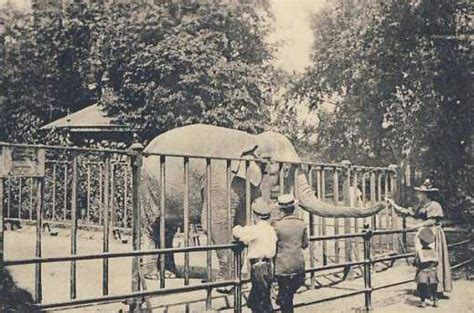 new year animals from 1900 zoological garden of hamburg