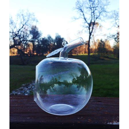 apple shaped clear glass planter  small succulents air