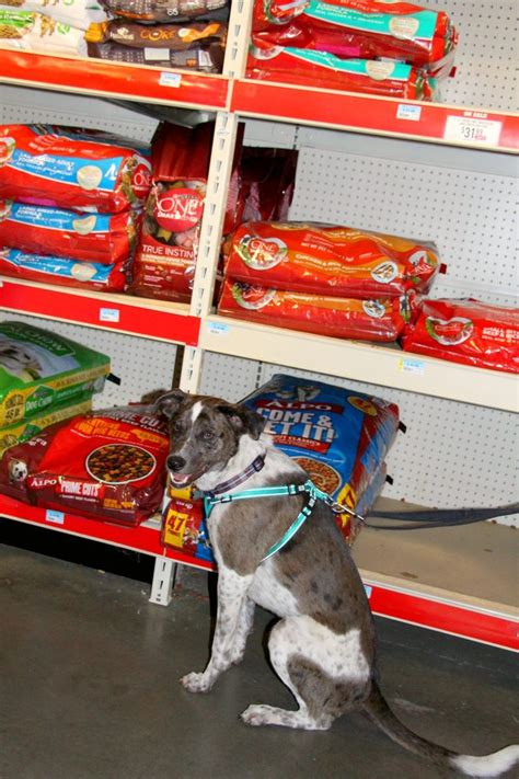 tractor supply puppy a trip with our to tractor supply tractorsupply miss frugal