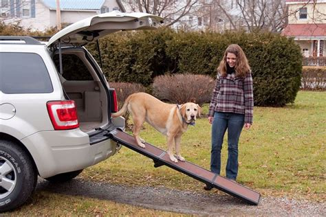 7 Dogs That Make The Best Accessories by 10 Useful Car Accessories For Owners Honest