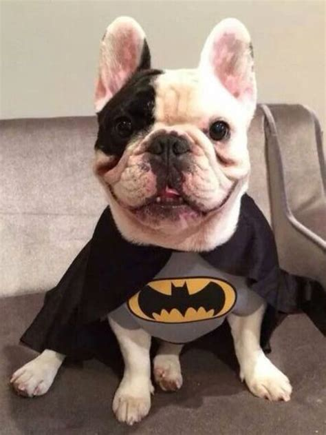 batman dog bed batman dog costume costume craze dog beds and costumes