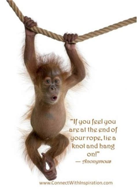 Hang On monkey quotes quotesgram