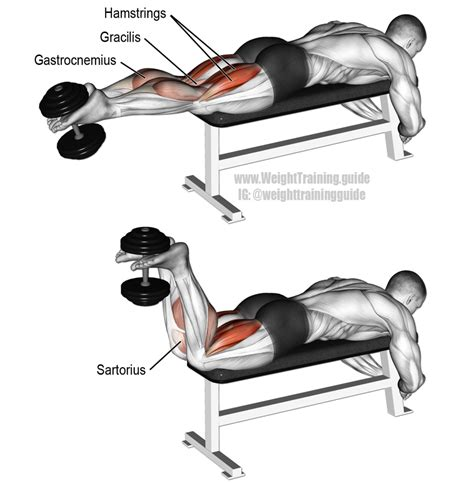 dumbbell leg curl exercise and weight