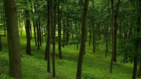 forest green green forest wallpaper 18476