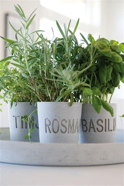vasi per piante aromatiche piante aromatiche da coltivare in cucina living corriere