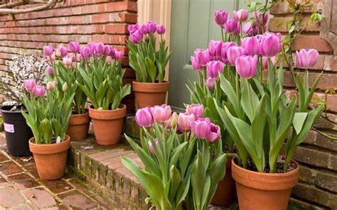 vasi per tulipani i vasi per piante vasi per piante modelli vasi