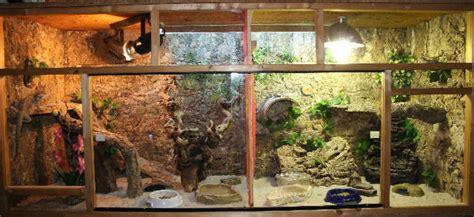 bartagame mit terrarium komplett