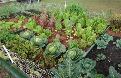 vegetable garden ideas the vegetable garden ideas for your gardening inspiration