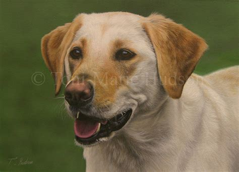 Do Yellow Labs Shed by Lab Puppies Cards Breeds Picture