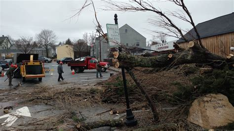 stop and shop trees the vineyard gazette martha s vineyard news severe northeaster leaves island in cleanup mode