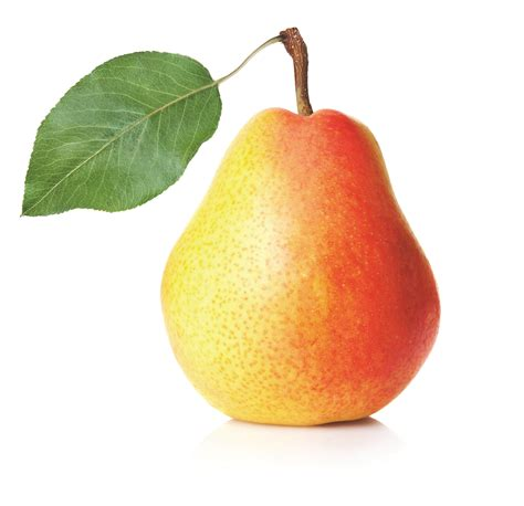 images of fruit low hanging fruit halton region small business centre blog