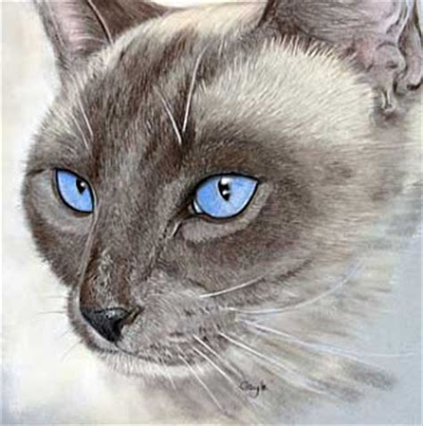 Kaos Kucing Blue Tabby Abstract serene siamese