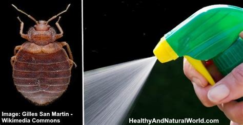 bed bug sprays  kill bed bugs fast true feed