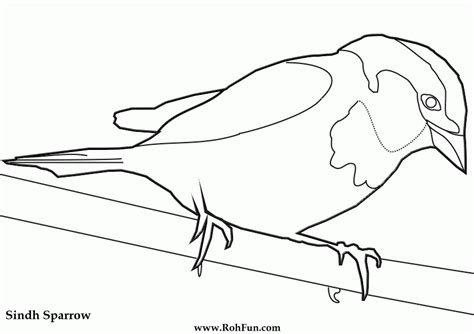 coloring pages birds realistic realistic birds colouring pages coloring home