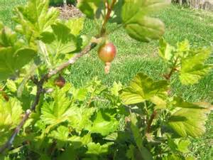 a year in the life of the fruit garden