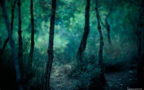 wallpaper blue forest forest desktop wallpapers wallpaper cave